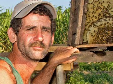 Cuba's Big Organic Honey Bee Boom