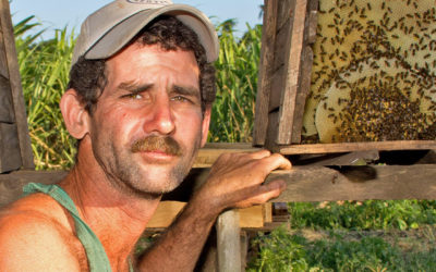 Cuba's Big Organic Honey Bee Boom