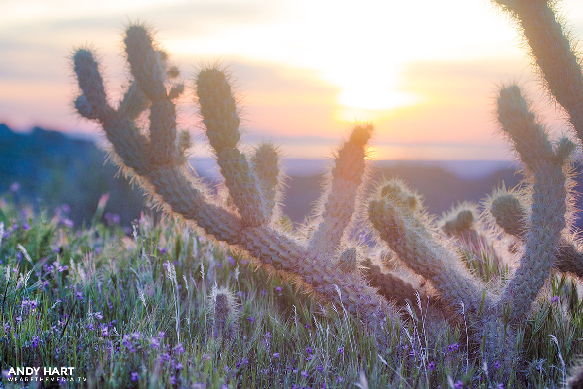 superbloom in the desert anza borrego california wildflowers