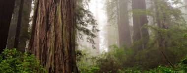 Ireland Replanting Extinct Majestic Redwood Forest